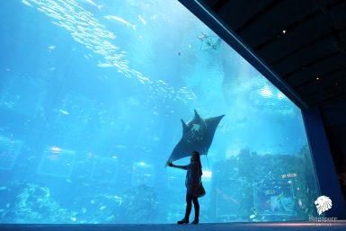 The Maritime Experiential Museum™ & S.E.A Aquarium Sentosa (2018)