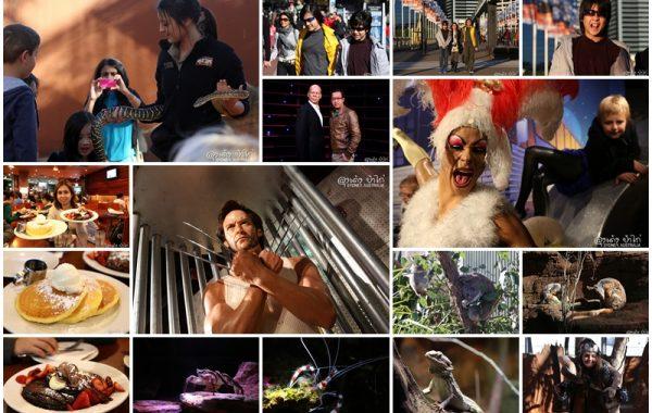 """""""9 วันในซิดนีย์"""" ตอน 2 Market Grill, Wild Life Sydney Zoo, Madame Tussauds, Pancakes on the Rock"""