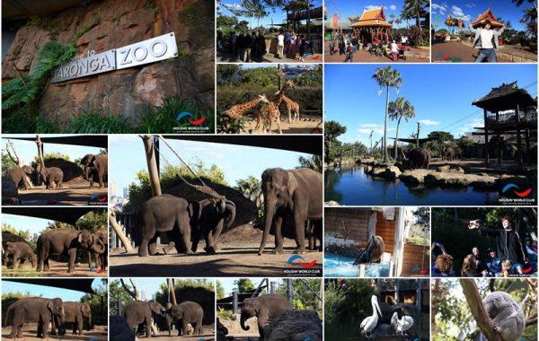 """""""9 วันในซิดนีย์"""" ตอน 3 """"ช้างไทย"""" ขวัญใจนักท่องเที่ยวทั่วโลกที่ สวนสัตว์ Taronga Zoo, Sydney"""